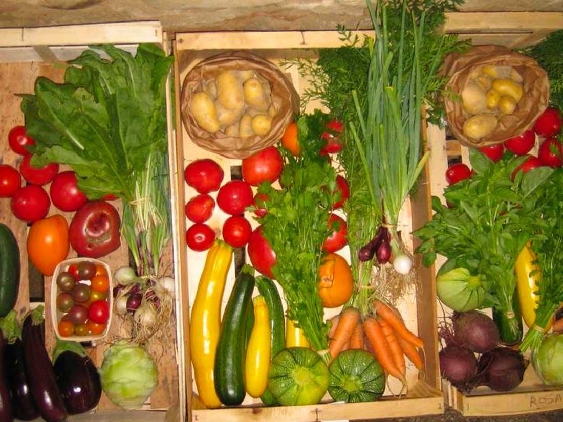 potager rainette image legume